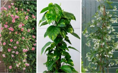 3 plantas para lucir tu Maceta Trepadora Treetop