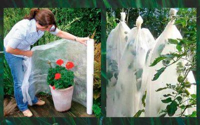 ¡Protege tus plantas de las heladas!